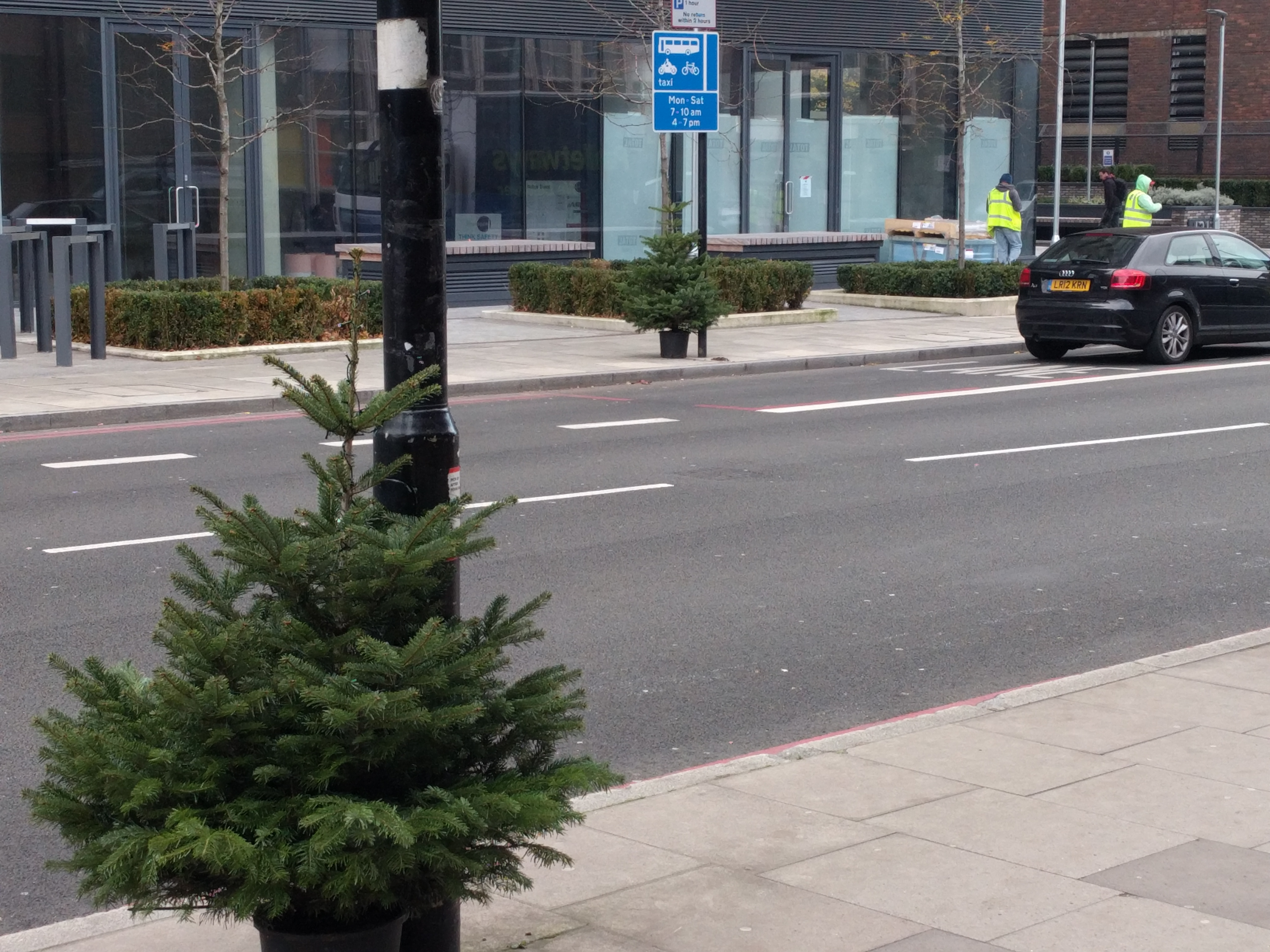 Putney Christmas Tree Collection Times - Postively Putney