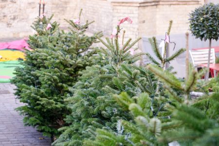 Christmas Tree Recycling Dates
